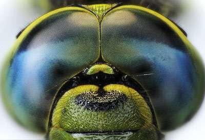 Создано приложение которое показывает мир глазами животных