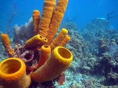 Первыми животными на Земле были морские губки – ученые