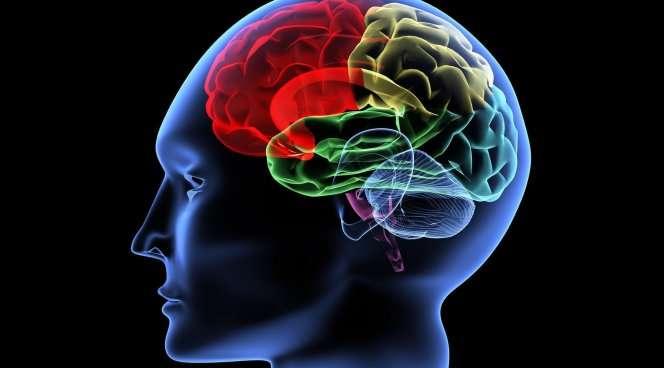 Стволовые клетки дозволят восстановить мозг после инсульта— Ученые