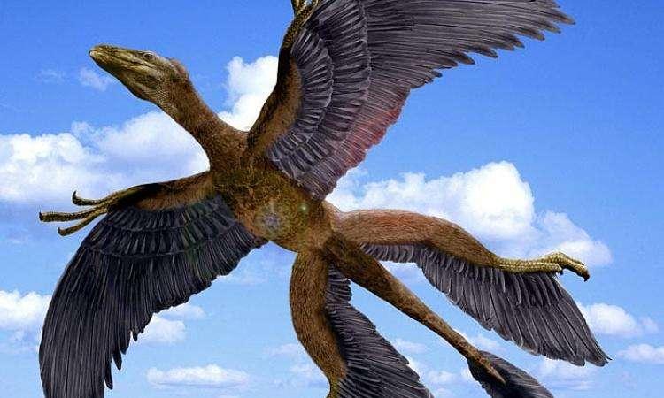 В Китайская республика обнаружили останки птицеподобного динозавра