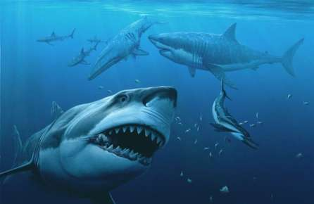 Ученые отыскали останки огромной доисторической акулы