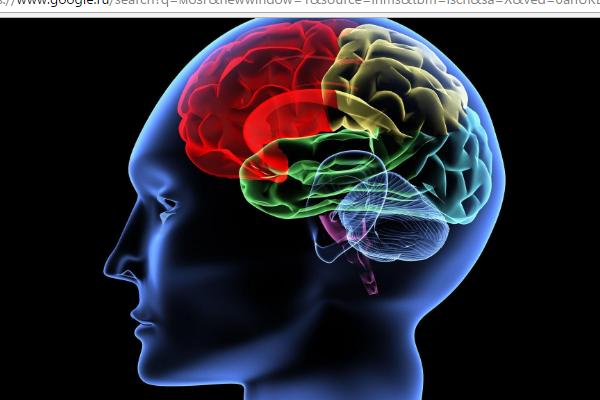Нижегородские ученые вырастили мозг впробирке