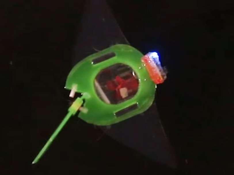 Ученые показали мягкого плавающего робота-ската